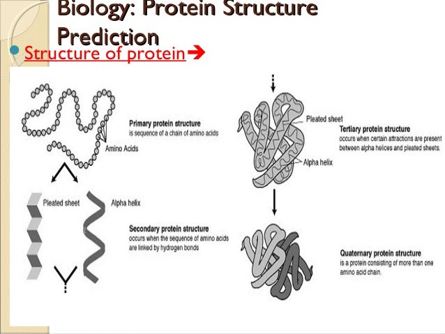 Biology Protein Structure