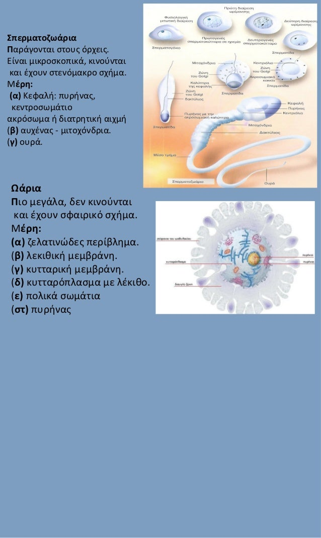what is the meaning of reproduction in biology