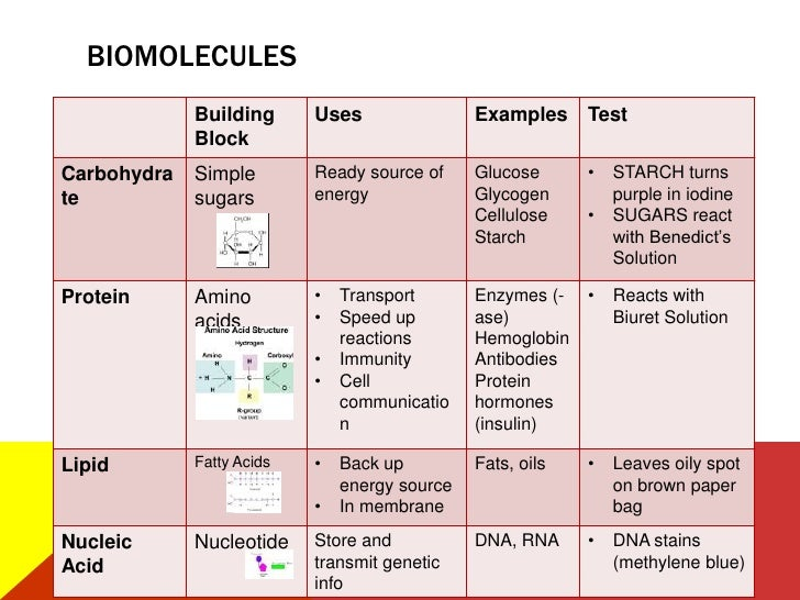 NC Biology EOC Review – Biomolecules Worksheet