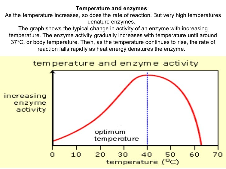 test for enzyme activity lab essay Ap biology 2004-2005 lab 2: enzyme catalysis ap biology 2004-2005 essay 2000 temperature and (2) ph affect the activity of this enzyme in.