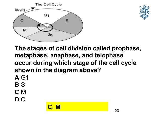 biology 11 review Welcome to the nelson biology 11 web links page this page contains links for each chapter's go to activities,  unit 1 review unit 2: genetic continuity.