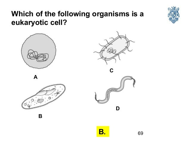 Biology Test Review 1