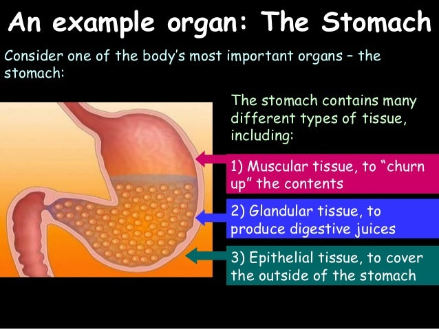 Aqa biology unit 2 system organism 13 ccuart Image collections