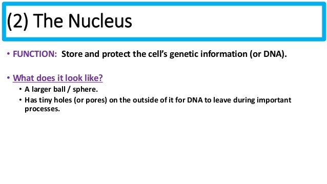 Biology unit 2 notes