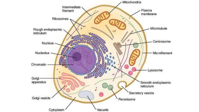 biology unit 2 notes Vbiology home page a site containing lots of revision resources for students studying a-level biology.