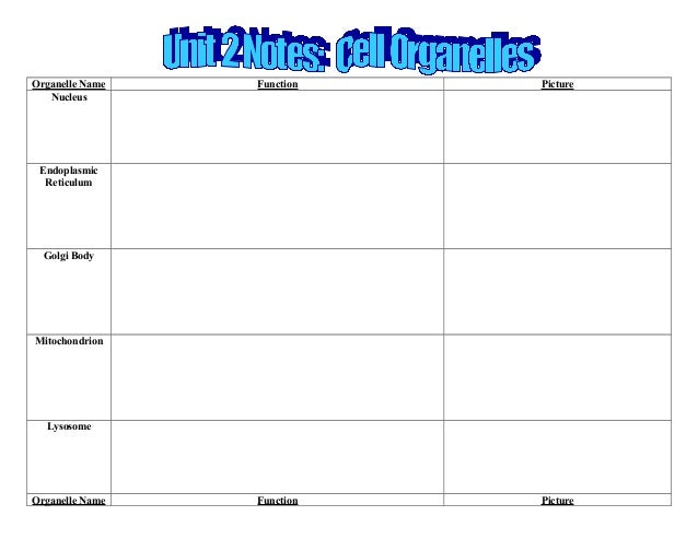 Biology unit 2 cells organelle notes template worksheet – Cells and Organelles Worksheet