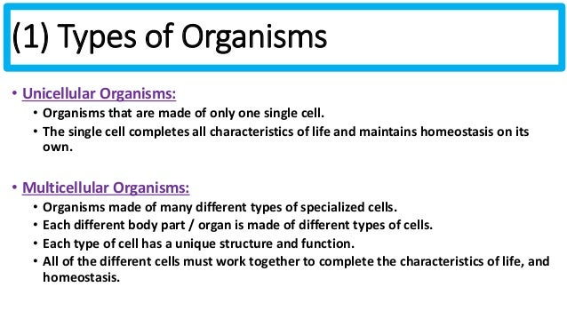 The economic importance of some unicellular organisms