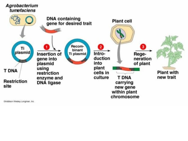 biology 5 01 Recombinant dna technology can readily clone a functional copy of a defective gene and insert it into a vector with the correct regulatory sequences but how can we deliver this functional gene into the cells of a person who has already been born.
