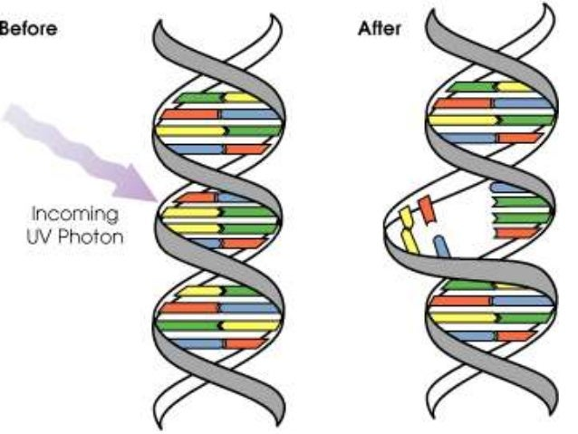 Errors in protein synthesis