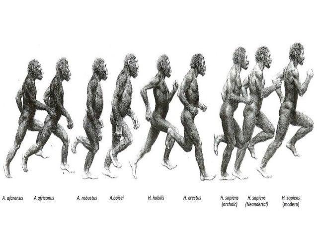 Biology Unit 7 Notes: Evidence for Evolution
