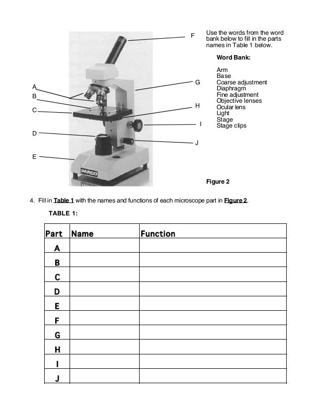 Microscope Parts Worksheet - Davezan