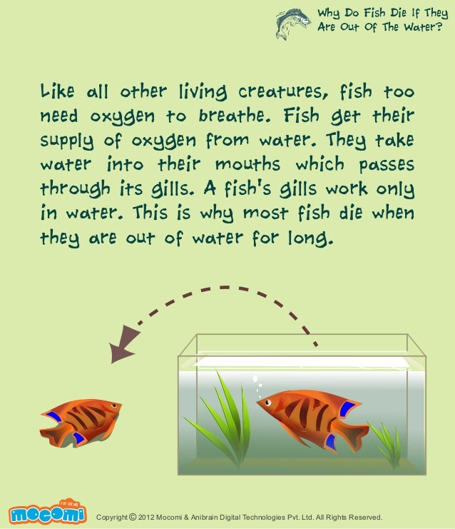 Why do fish die if they are out of the water for Do all fish have gills
