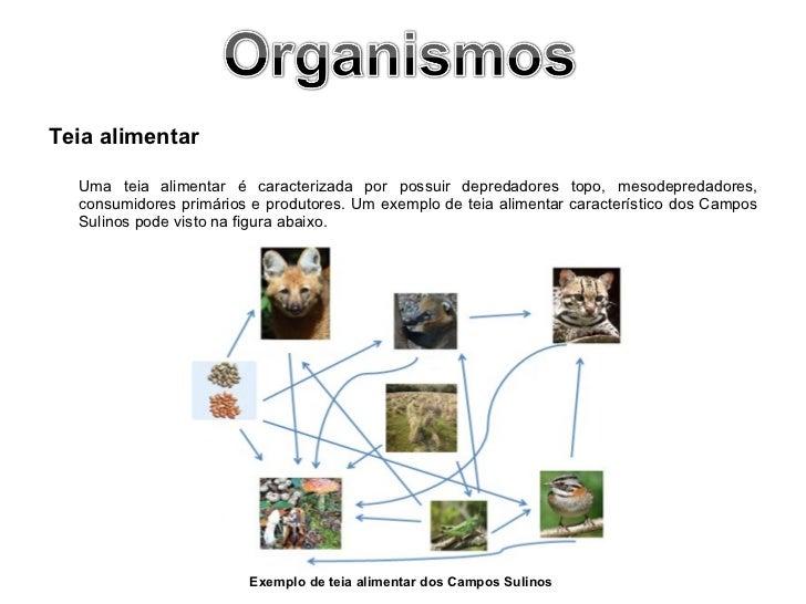 <ul><li>Teia alimentar </li></ul><ul><li>Uma teia alimentar é caracterizada por possuir depredadores topo, mesodepredadore...