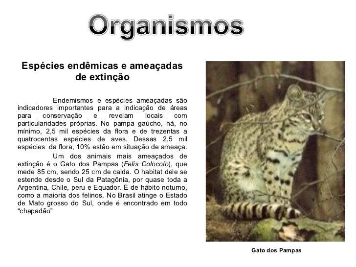 <ul><li>Espécies endêmicas e ameaçadas de extinção </li></ul><ul><li>Endemismos e espécies ameaçadas são indicadores impor...