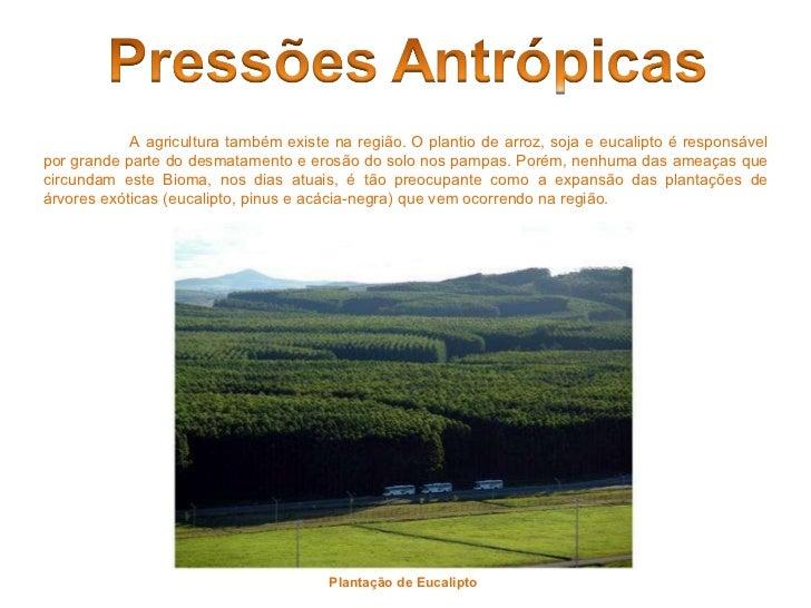Plantação de Eucalipto   A agricultura também existe na região. O plantio de arroz, soja e eucalipto é responsável por gra...