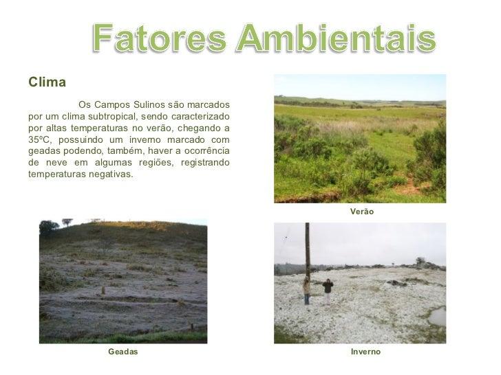 Clima  Os Campos Sulinos são marcados por um clima subtropical, sendo caracterizado por altas temperaturas no verão, cheg...