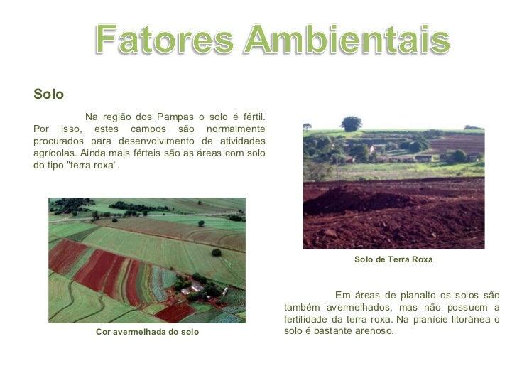 Solo  Na região dos Pampas o solo é fértil. Por isso, estes campos são normalmente procurados para desenvolvimento de ati...