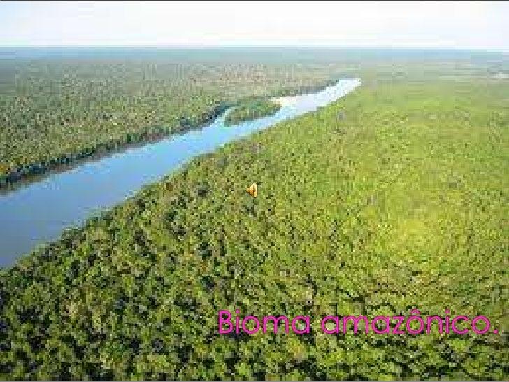 A Floresta Amazônica está localizada na Região Norte do Brasil, e possuiuma área de cerca de 5,5 milhões de km². Fazendo p...