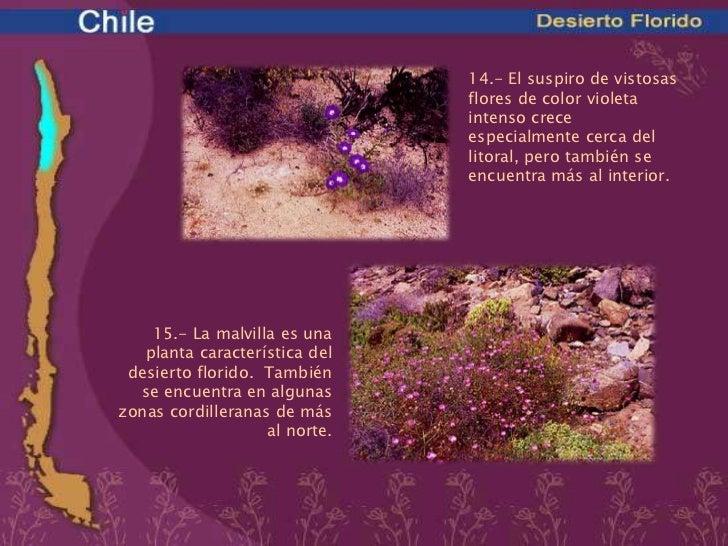 Bioma de chile desierto florido