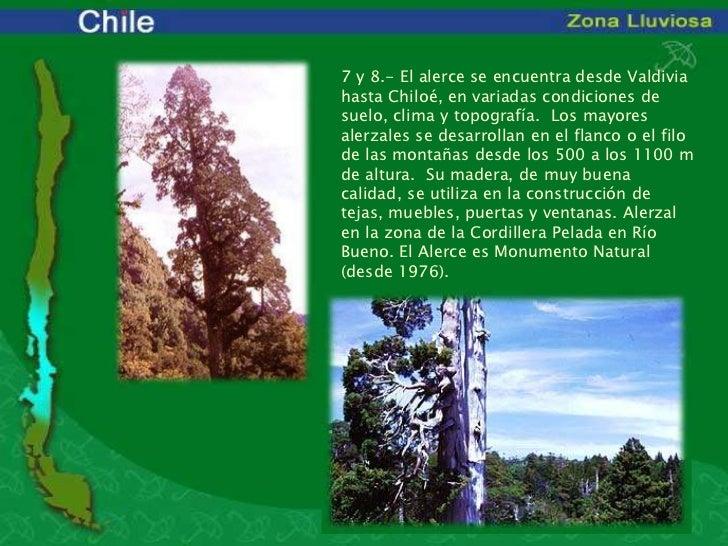 Bioma de chile zona lluviosa for Poda de arboles zona sur