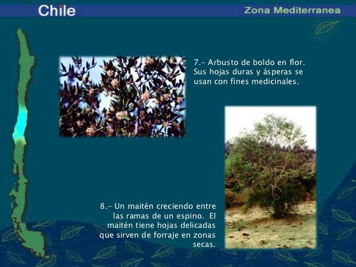 Bioma de chile zona mediterr nea for Marmoles y granitos zona norte