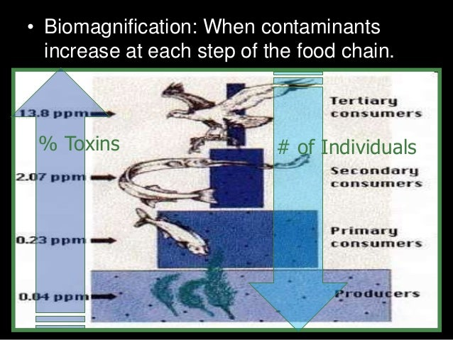 • Biomagnification: When contaminants increase at each step of the food chain. # of Individuals% Toxins