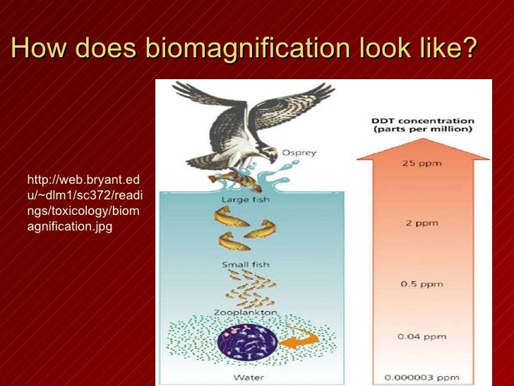 4 how does biomagnification
