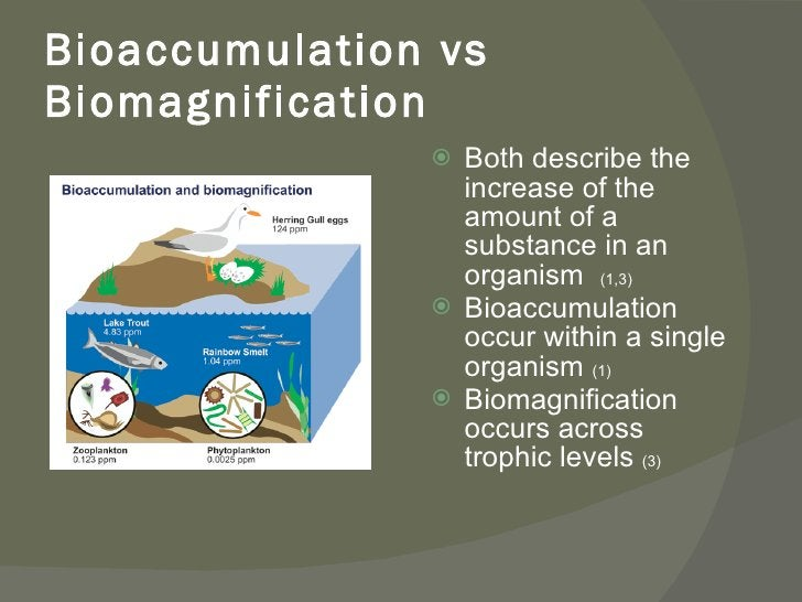 Bioaccumulation vs Biomagnification <ul><li>Both describe the increase of the amount of a substance in an organism  (1,3) ...