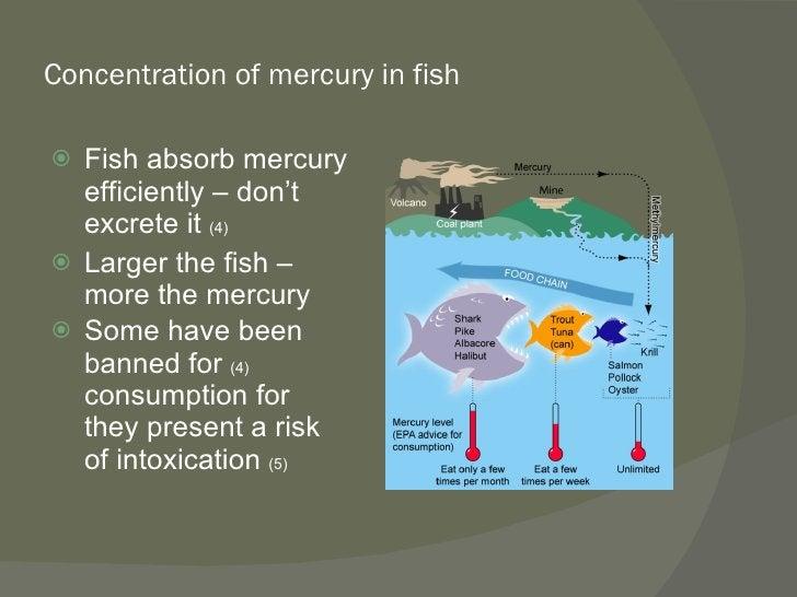 Concentration of mercury in fish <ul><li>Fish absorb mercury efficiently – don't excrete it  (4) </li></ul><ul><li>Larger ...