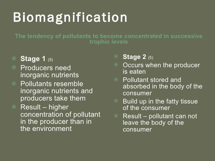 Biomagnification <ul><li>T he tendency of pollutants to become concentrated in successive trophic levels </li></ul><ul><li...