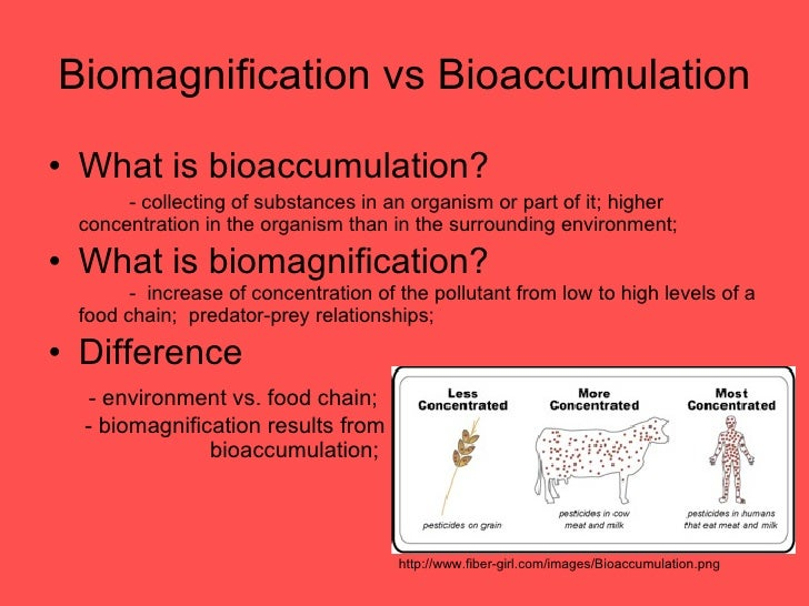 Biomagnification and 10% law.