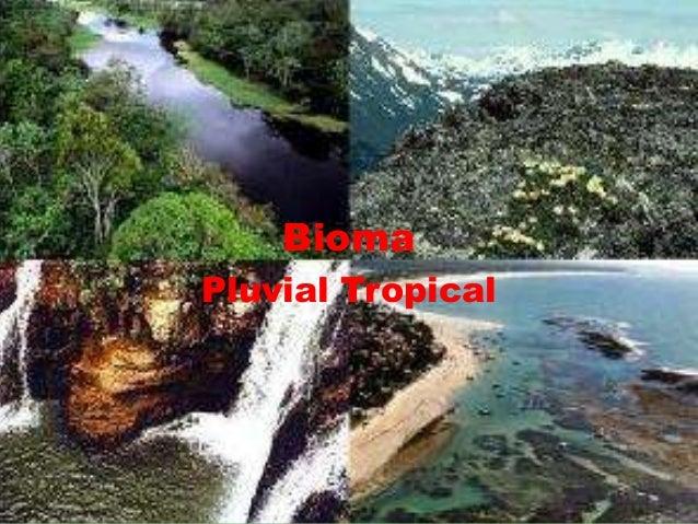 BiomaPluvial Tropical
