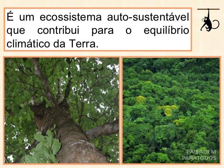 É um ecossistema auto-sustentável que contribui para o equilíbrio climático da Terra.