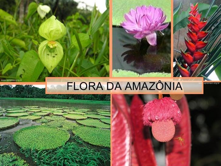 FLORA DA AMAZÔNIA