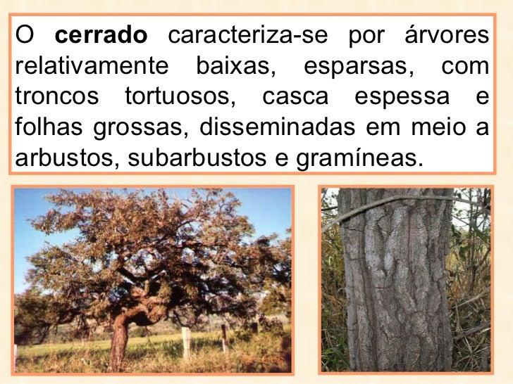 O  cerrado  caracteriza-se por árvores relativamente baixas, esparsas, com troncos tortuosos, casca espessa e folhas gross...