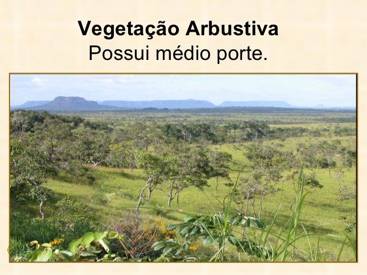 <ul><li>Vegetação Arbustiva </li></ul><ul><li>Possui médio porte. </li></ul>