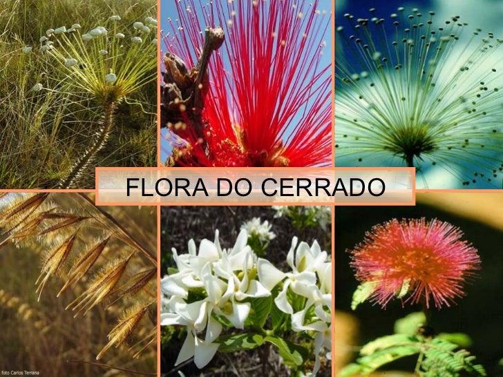 FLORA DO CERRADO