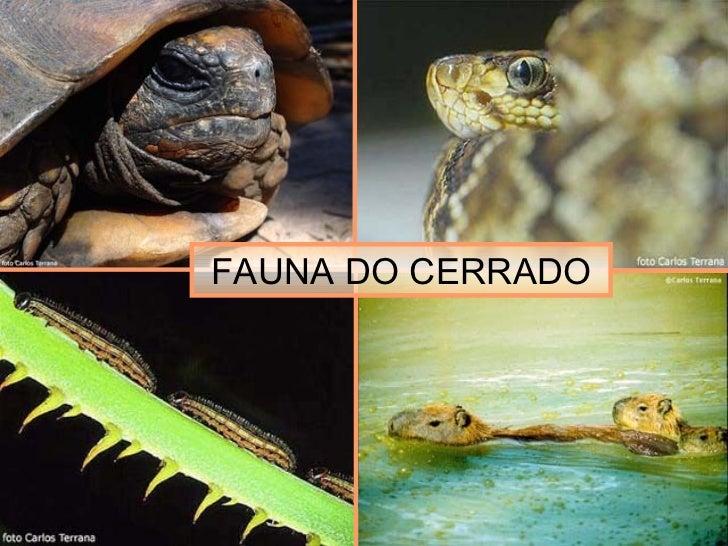 FAUNA DO CERRADO