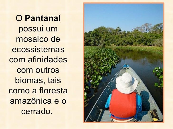 O  Pantanal  possui um mosaico de ecossistemas com afinidades com outros biomas, tais como a floresta amazônica e o cerrad...