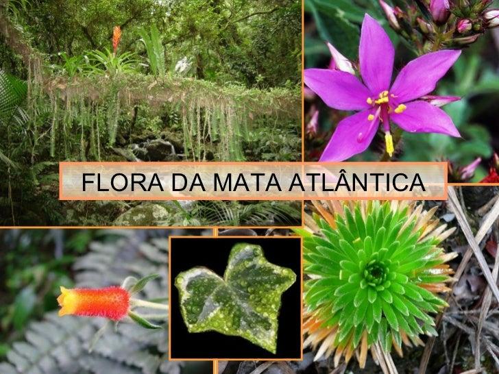 FLORA DA MATA ATLÂNTICA