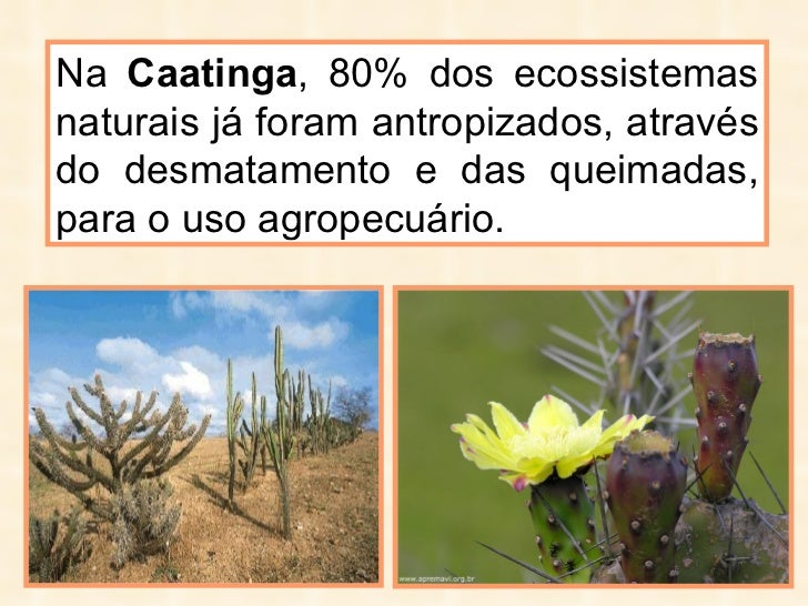 Na  Caatinga , 80% dos ecossistemas naturais já foram antropizados, através do desmatamento e das queimadas, para o uso ag...