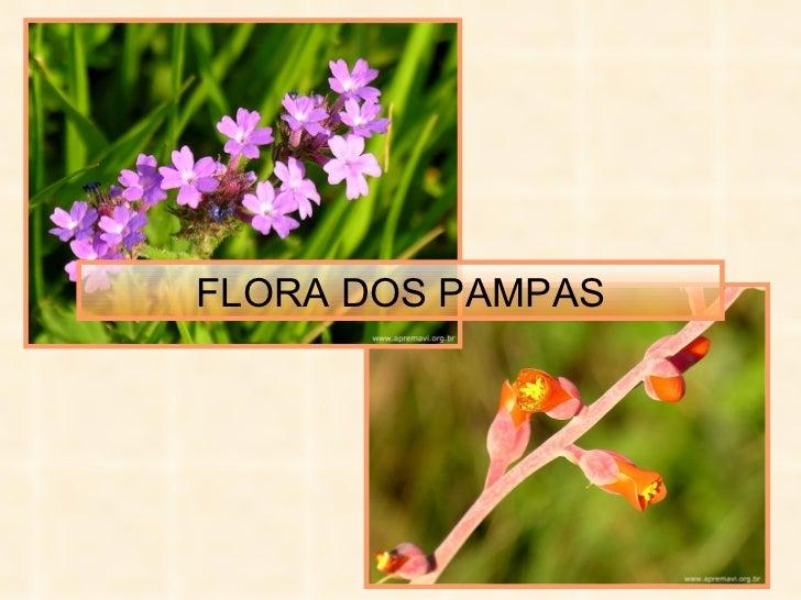 FLORA DOS PAMPAS