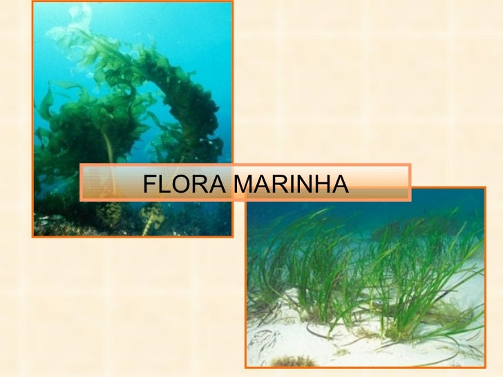 FLORA MARINHA