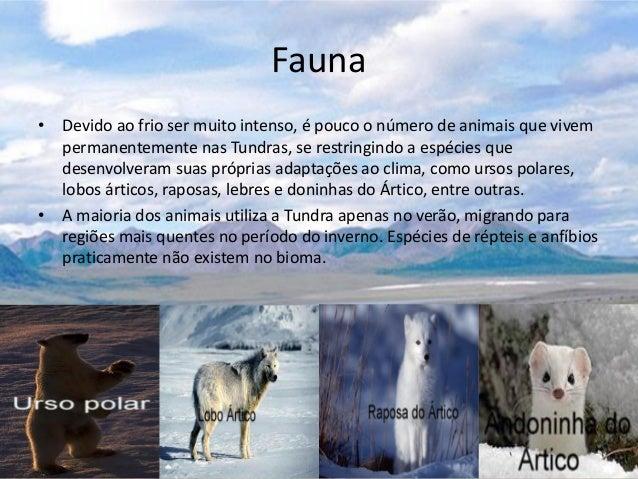 Resultado de imagem para fauna  do artico