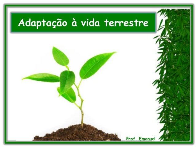 Adaptação à vida terrestre Prof. Emanuel