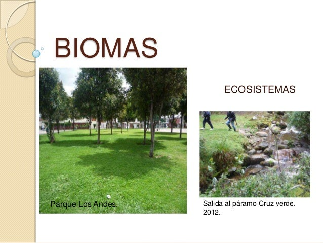 BIOMAS ECOSISTEMAS Salida al páramo Cruz verde. 2012. Parque Los Andes.