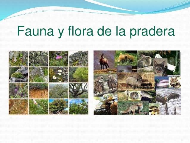 Biomas  Biomas de Venezuela