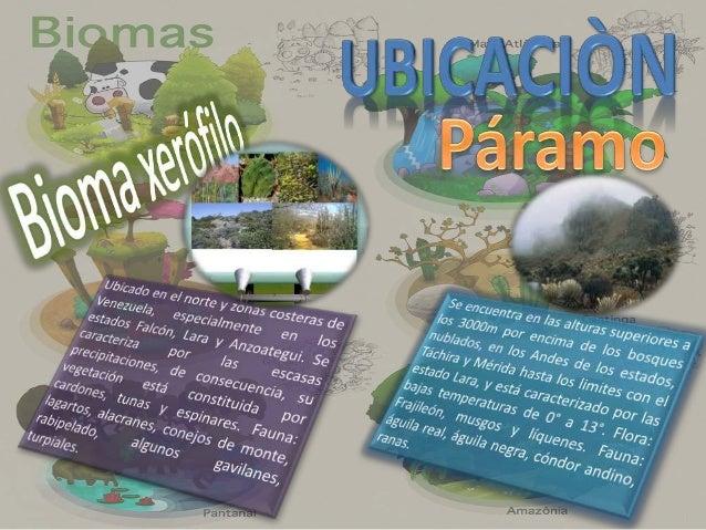 Ubicado en las zonas bajas, nunca supera los 500m de altura. Se localiza en el delta del Orinoco, Guayana, sur del lago de...