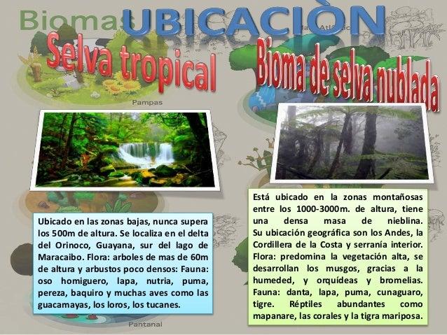 Es la típica vegetación de las zonas acuaticas tropicales y subtropicales con temperatura entre lo 25°-28°. El mangle es u...