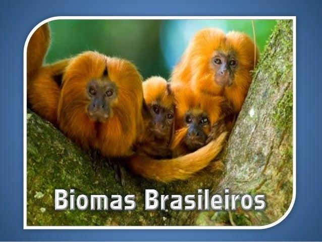 Biogeografia • Estuda a distribuição de espécies vegetais e animais(fitogeográfico e zoogeográfico); • Classificação: • Qu...